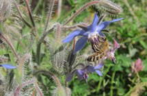 BeeOnBorage