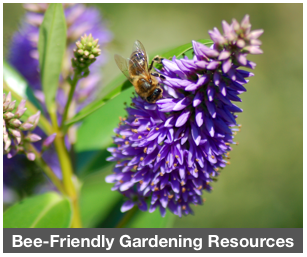 ResourceCenter_BeeFriendlyGardening