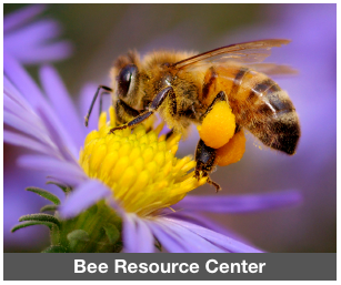 ResourceCenter_BeeMain